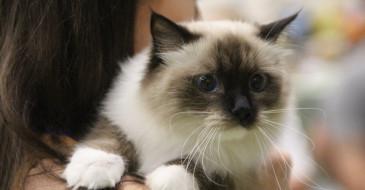 XXXI Międzynarodowa Wystawa Kotów Rasowych