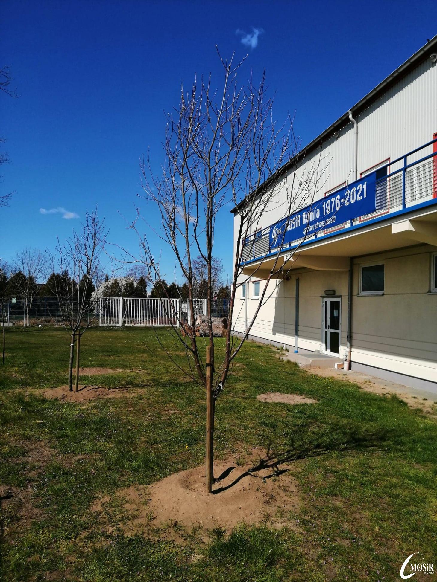 Nowe drzewka wokół stadionu!